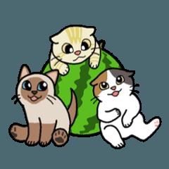 Summer, Orin and Kinaco and Myasuke