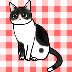 Black & White CATS animation