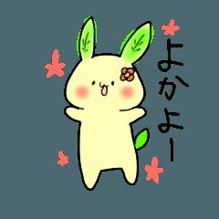 green tea rabbit