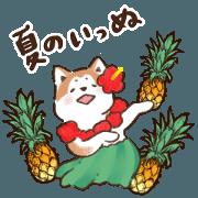 สติ๊กเกอร์ไลน์ Summer Akitainu