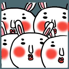 MARO rabbit again