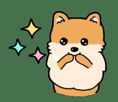 Cute Pomeranian Animation sticker #11857935