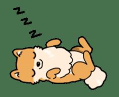 Cute Pomeranian Animation sticker #11857940