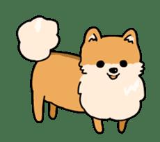 Cute Pomeranian Animation sticker #11857952