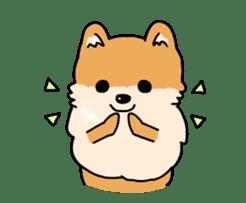 Cute Pomeranian Animation sticker #11857957