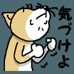 Mr.Shiba 3
