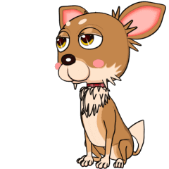Bambi the Chihuahua