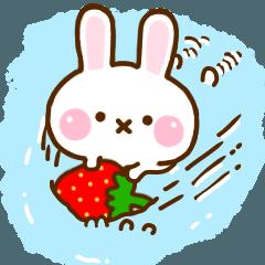 Rabbit Strawberry 10