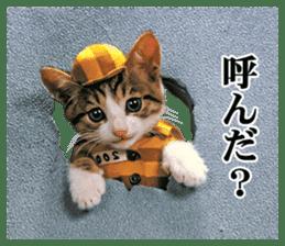 NAMENEKO2 sticker #12193756