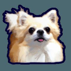 Komaru of a Chihuahua 3