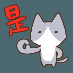 Taiwan's cute cats