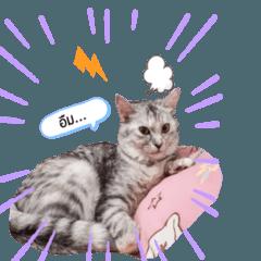 สติ๊กเกอร์ไลน์ แมว ฟูจิ