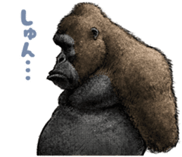 Gorilla gorilla 3 sticker #12354149