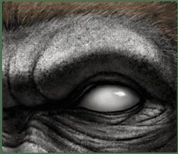 Gorilla gorilla 3 sticker #12354170