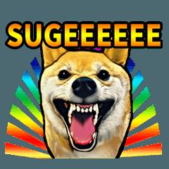 Funny face Japanese Shiba inu sticker