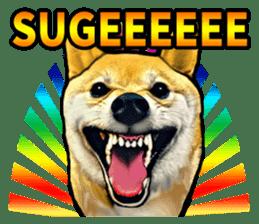 Funny face Japanese Shiba inu sticker sticker #12434759