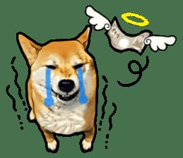 Funny face Japanese Shiba inu sticker sticker #12434760