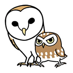 Sticker of barn owl