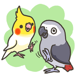 Cockatiel and Grey Parrot 2
