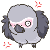 Cockatiel and Grey Parrot 2 sticker #12467711