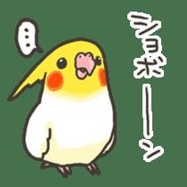 Cockatiel and Grey Parrot 2 sticker #12467714