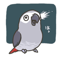 Cockatiel and Grey Parrot 2 sticker #12467721