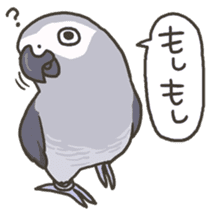 Cockatiel and Grey Parrot 2 sticker #12467725