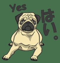 Fawn Pug2 sticker #12485103