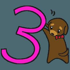Modest dog3
