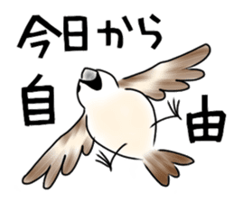 Daily life of a Sparrow sticker #12520857