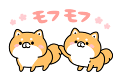 Animation of cute Shiba Inu sticker #12562051