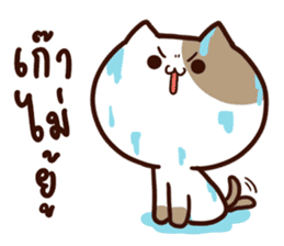 Tofu the cat sticker #12562833