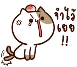 Tofu the cat sticker #12562849