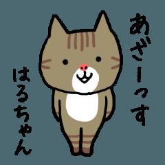 Haruchan cat