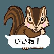 สติ๊กเกอร์ไลน์ Move! Shampoo (squirrel) everyday