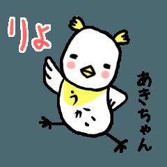 Akichan bird