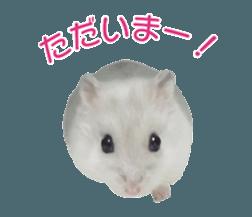 I like hamsters 3 sticker #12789343