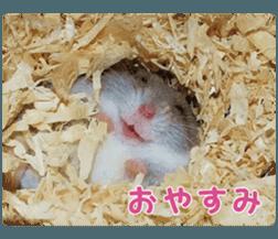 I like hamsters 3 sticker #12789345