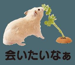 I like hamsters 3 sticker #12789346