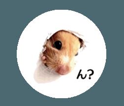 I like hamsters 3 sticker #12789348