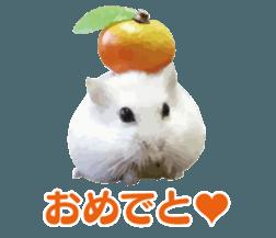 I like hamsters 3 sticker #12789349
