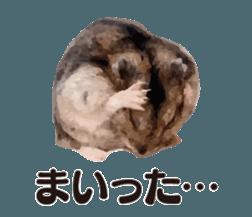 I like hamsters 3 sticker #12789350