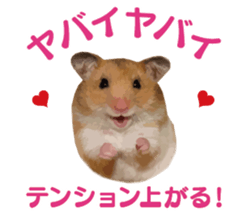 I like hamsters 3 sticker #12789356