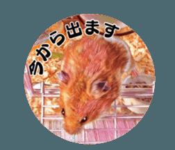 I like hamsters 3 sticker #12789358