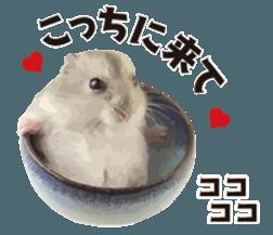 I like hamsters 3 sticker #12789360
