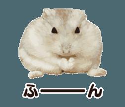 I like hamsters 3 sticker #12789361