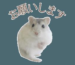 I like hamsters 3 sticker #12789363