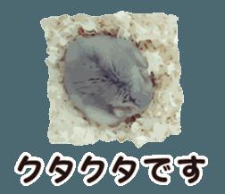 I like hamsters 3 sticker #12789364