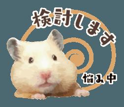 I like hamsters 3 sticker #12789365
