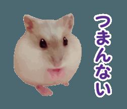 I like hamsters 3 sticker #12789366